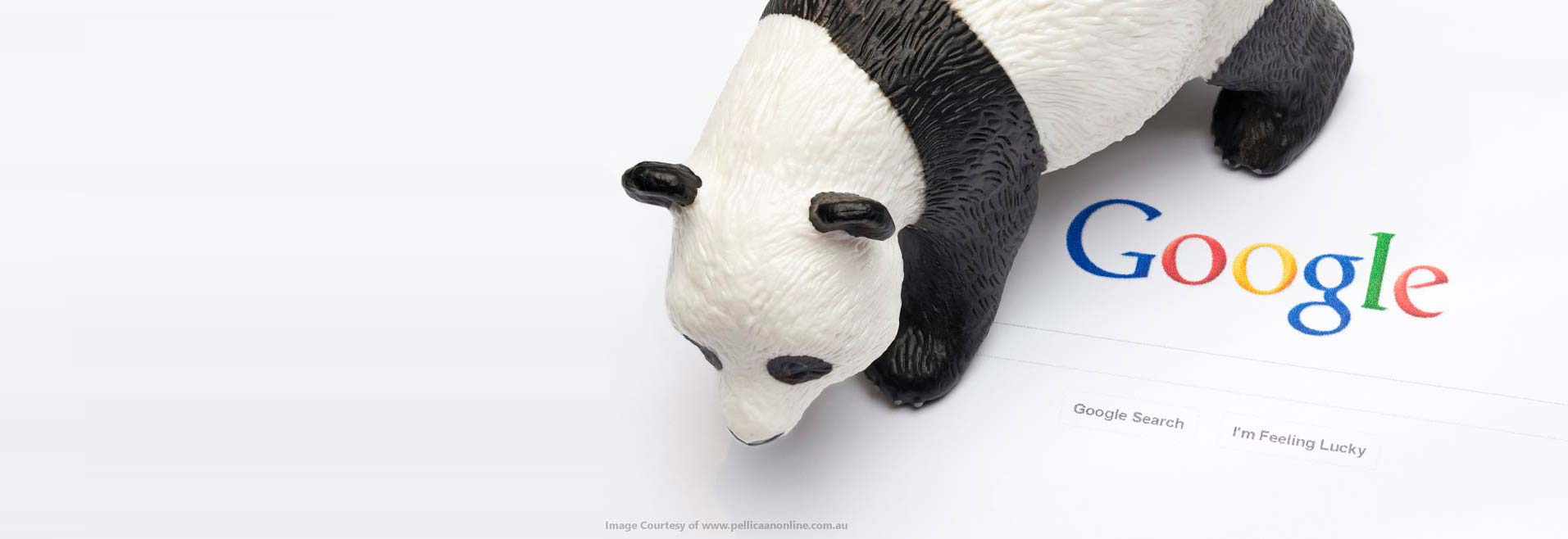 google panda que es